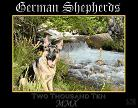 german shepherd 2010 calendar