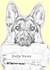 Materialistic GSD Newsletter